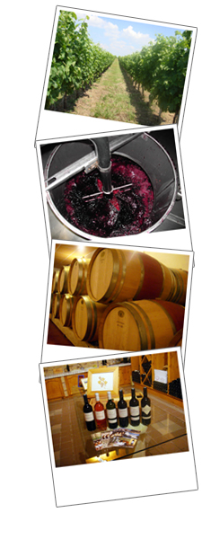 bandeauvinification