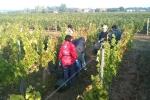 vendanges2010_06